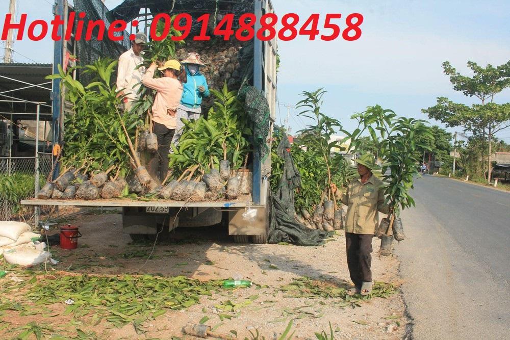 Vận chuyển cây giống đi Lào